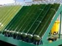 Американские ученые разработали технологию производства бензина из водорослей